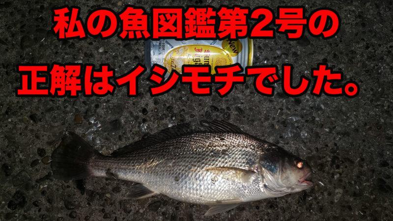銚子で釣りデビュー。その3 イシモチとのファイト。