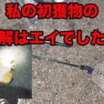 銚子で釣りデビュー。その2 エイとのファイト。