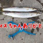茨城県久慈漁港でサビキ釣りとアジング に挑戦!その2